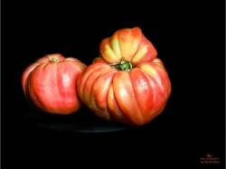 Pomodori Nasone