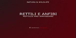 Rettili & Anfibi