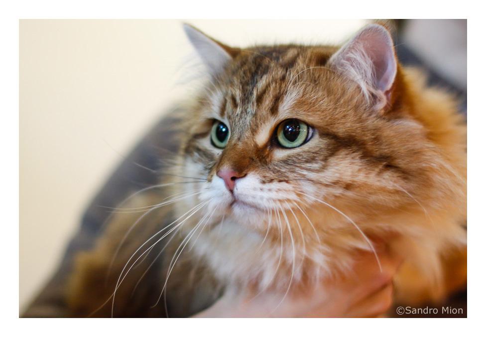 I più bei gatti del mondo
